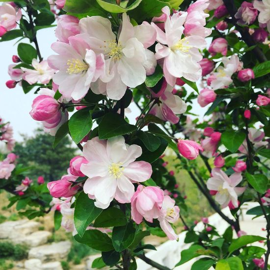 Flower Spring Blossom Beauty In Nature