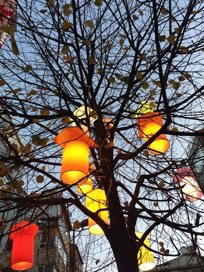 Trees Tree Outdoors Decoration Colors Colorful Hanged Light Decorated Candle Red Yellow Backgrounds Street Background Sky