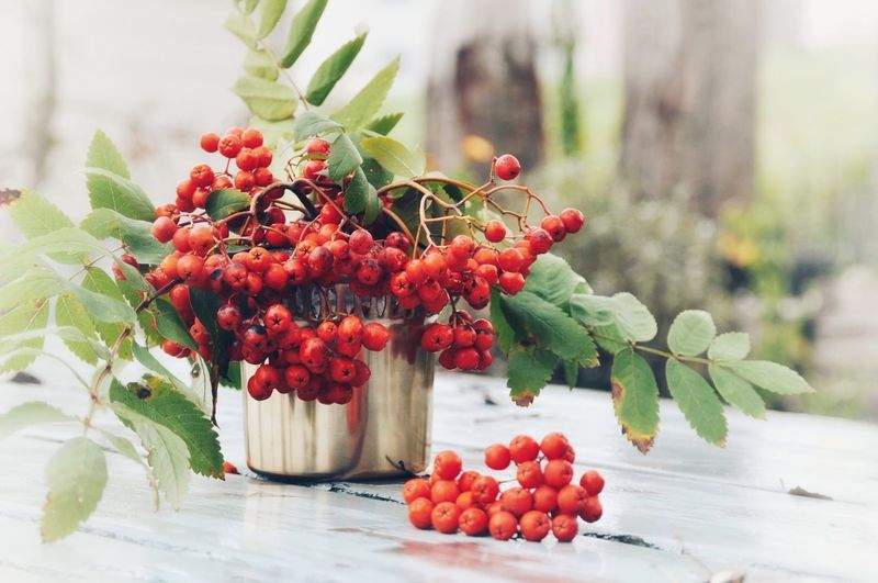 Close-up of rowanberries in container on table