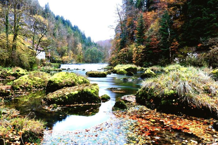 Tree Nature River Tranquil Scene Beauty In Nature Forest Autumn Beauty In Nature Tranquility