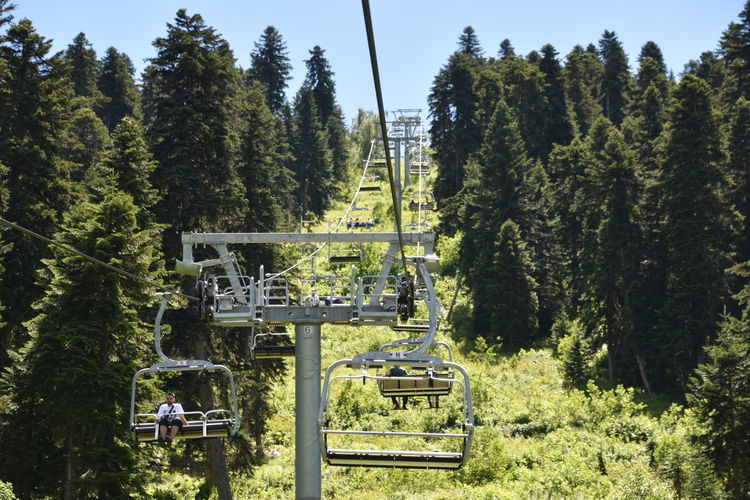EyeEm Nature Lover EyeEm Gallery Purist In Photography Ski Lift The Purist (no Edit, No Filter) Beauty In Nature Chairlift Day Eye4photography  Forest Green Color Growth Land Nature No People Outdoors Sunlight Tranquility Tree