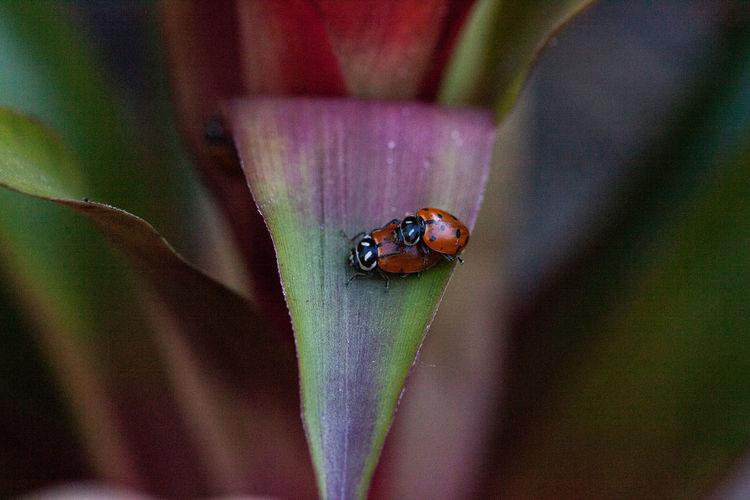 Close-up of ladybug on leaf