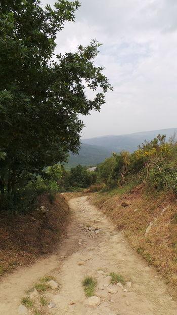 Camino CaminodeSantiago El Camino De Santiago Jakobsweg Pilgern Pilgrimage Road Track Way Way Of Saint James Weg