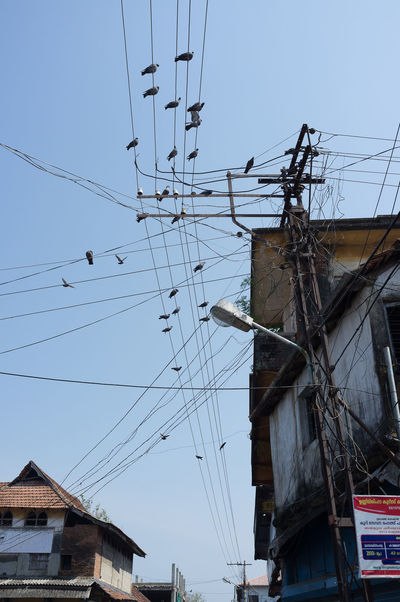 Birds on cables in Kochi Birds Built Structure Cable Connection Day Electricity  Electricity Pylon India Kochi Low Angle View Outdoors Power Line  Power Supply Technology