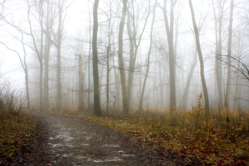 Nebelwald Autumn Beauty In Nature Cold Temperature Day Environment Fog Foggy Landscape Foggy Weather Fogwood Forest Idyllic Landscape Leaves Nature Nature Reserve No People Outdoors Scenics Tranquility Tree Tree Area Tree Trunk Winter