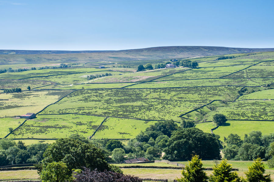Rolling Hills of Yorkshire Dales Dales Yorkshire Agriculture Beauty In Nature England England Uk Environment Green Color Land Landscape Rolling Landscape Rural Scene Scenics - Nature Yorkshire Dales