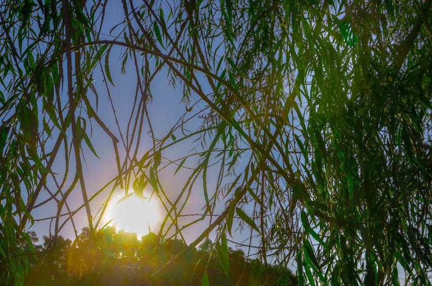Beauty In Nature Branch Close-up Day Freshness Green Color Growth Low Angle View Nature No People Outdoors Plant Sky Sunlight Tree The Great Outdoors - 2018 EyeEm Awards