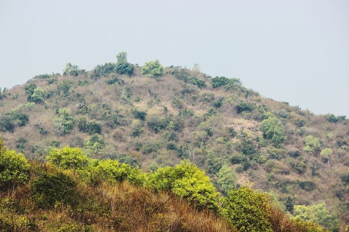 KAILASAGIRI, VISAKHAPATNAM... MOUNTAIN... Nature Tree Beauty In Nature Outdoors No People Forest Day Mountain Sky Landscape