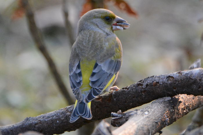 Bird Photography Birdwatching Birdwatcher Birds Wildlife Birds Of EyeEm  Birds🐦⛅ Birds Of Prey EyeEm Selects Bird Animal Wildlife Perching Nature Tree Animals In The Wild One Animal Beauty In Nature Songbird