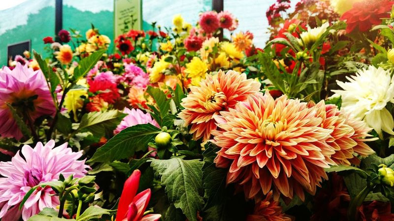Flower Freshness Petal Flower Show Colourful Fragnance Outdoors Day With Friends