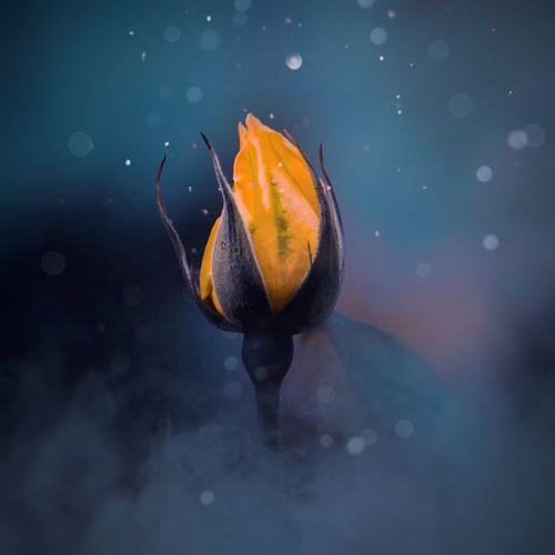 Close-up of wet orange leaf floating on water