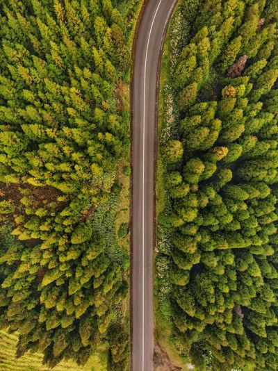 Straight line in the forest trees DJI Mavic Air DJI X Eyeem Drone Photography Portugal Açores - São Miguel Tourism Azores Green Color Plant Healthy Eating Tree Growth No People Food And Drink Agriculture Aerial View Abundance Wellbeing Land Outdoors High Angle View Freshness Beauty In Nature Day Full Frame Nature Food The Great Outdoors - 2019 EyeEm Awards