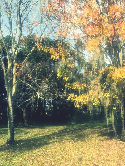 Autumn Winter Seasons Florida Trees What Time Is It? Colors Changing Spanish Moss