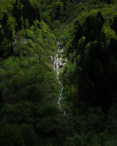 French Pyrénées Montains    Cauterets Cascade Green Color Land Beauty In Nature Nature Water Growth Scenics - Nature Tranquility No People Non-urban Scene Outdoors Forest Environment Tranquil Scene Flowing Water