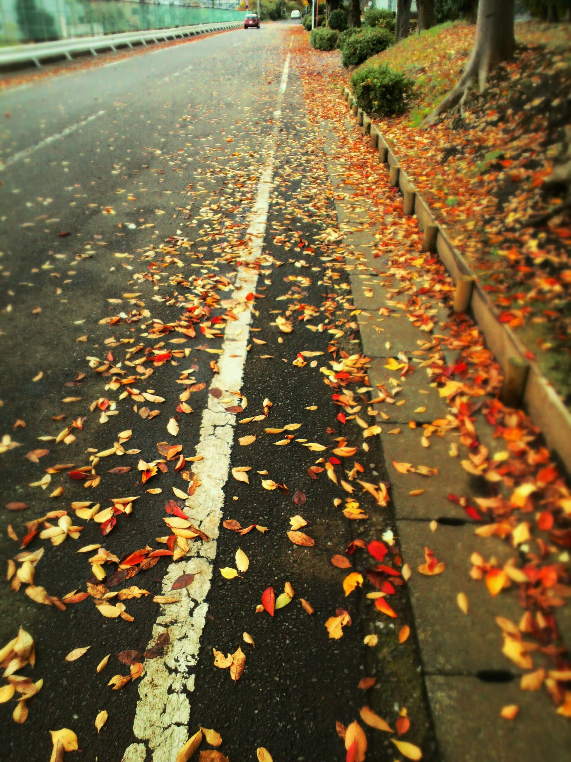 the way forward, transportation, diminishing perspective, autumn, season, vanishing point, leaf, change, asphalt, high angle view, railroad track, road, leaves, street, fallen, surface level, wet, road marking, dry, nature