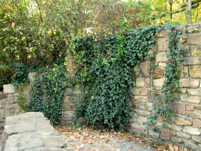 Architecture Brick Building Building Exterior Built Structure Bush Day Garden Path Green Color Growth Hedge Leaf Lush Foliage Nature No People Ornamental Garden Outdoors Plant Plant Part Solid Stone Wall Tree Wall Wall - Building Feature