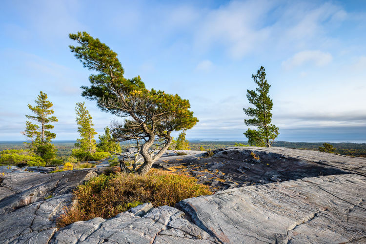 Scenic view of rocks by trees against sky