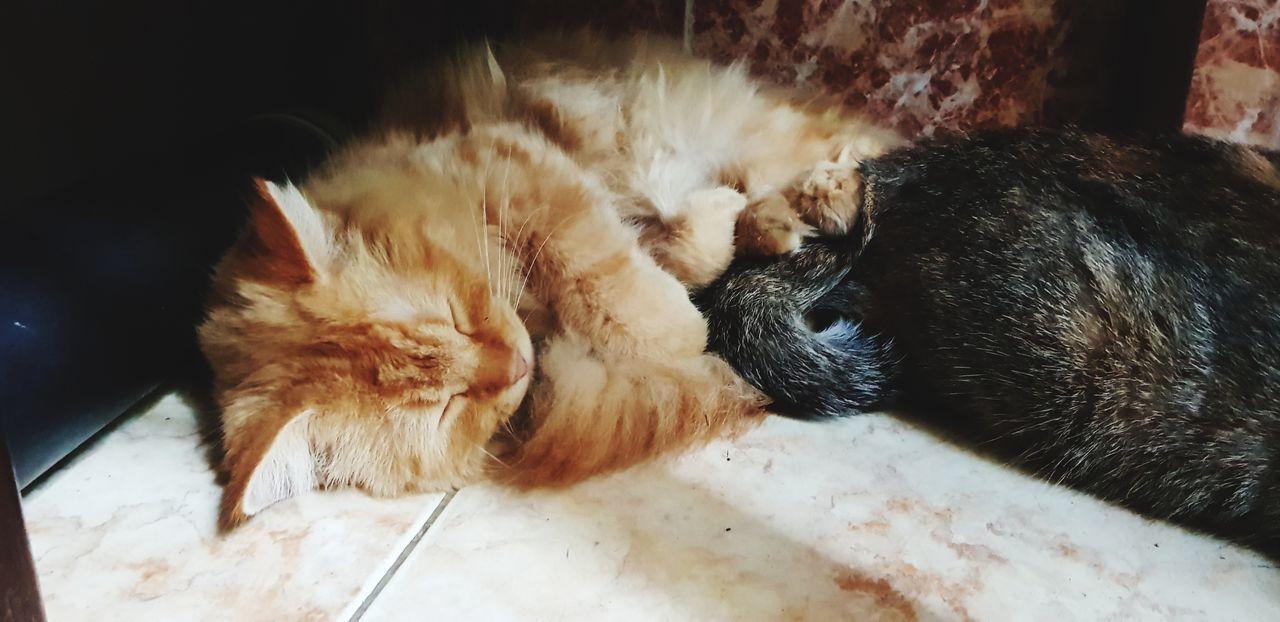 Tớ chỉ muốn ngủ thôi Cat Today Sleeping Cat