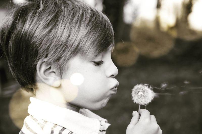 Close-up portrait of boy holding dandelion