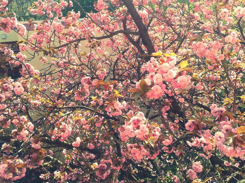 Knospen Farbenfroh Natur Japan Blüte Kreation Schönheit Frühling