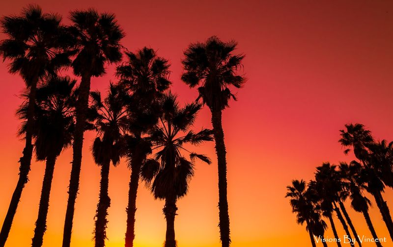 Palm Tree Palm Trees Apocalypse Now God's Beauty Godscreation Gods Creation California California Coast Losangeles Nature No People Beauty In Nature Backgrounds Outdoors Plant Part Day Agriculture Red Scenics Sky