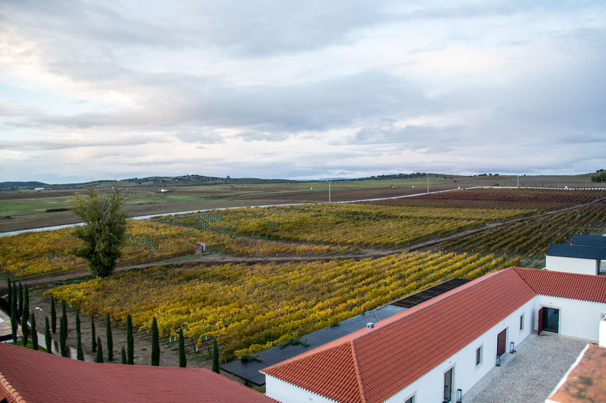 Torre de Palma, Wine Hotel. Monforte, Portugal. Agriculture Day Nature No People Outdoors Social Issues Sport