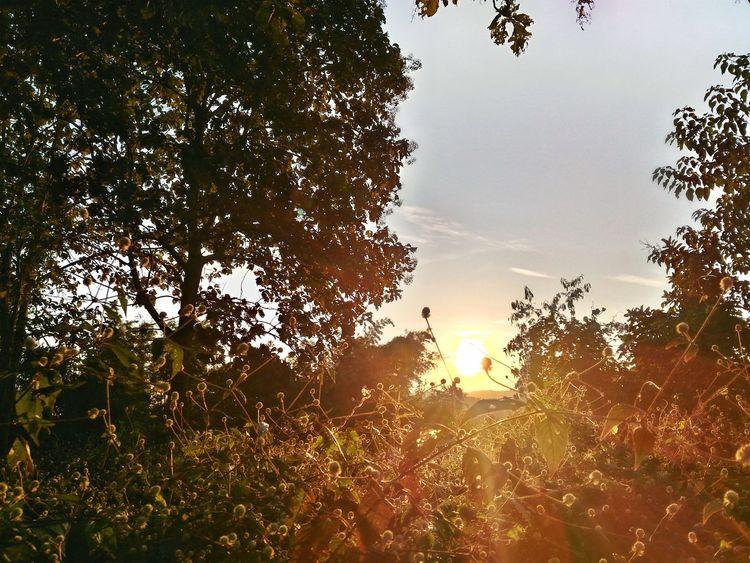 Back Lit Beauty In Nature Cloud - Sky Grass Growing Growth Idyllic Landscape Lens Flare Nature No People Non Urban Scene Non-urban Scene Orange Color Outdoors Plant Scenics Sky Sun Sunbeam Sunlight Sunset Tranquil Scene Tranquility Tree