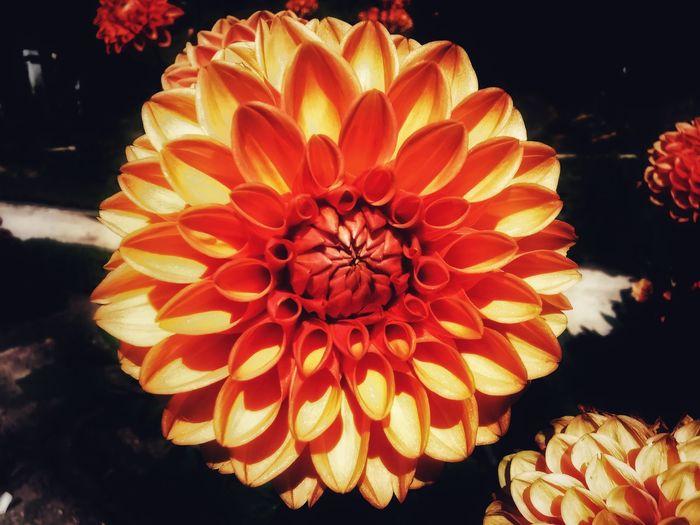Close-up of orange flowering plant