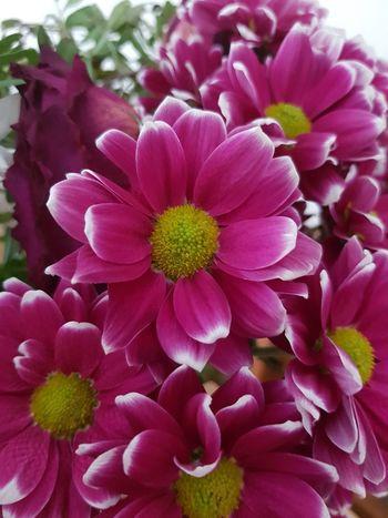 EyeEm Best Shots EyeEm Selects EyeNatureLover EyeEmNewHere Flower Head Flower Pink Color Petal Peony  Close-up Plant In Bloom Plant Life Flowering Plant Apple Blossom