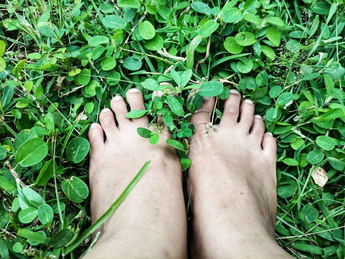 Low section of person legs by plants