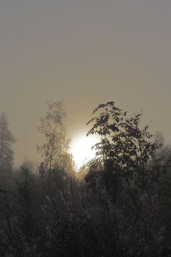 Dawn of a crispy fresh morning! First Light Mist Nature Autumn White Album Sunlight Towards The Light Nature Photography Dawn Pentax Edited On IOS