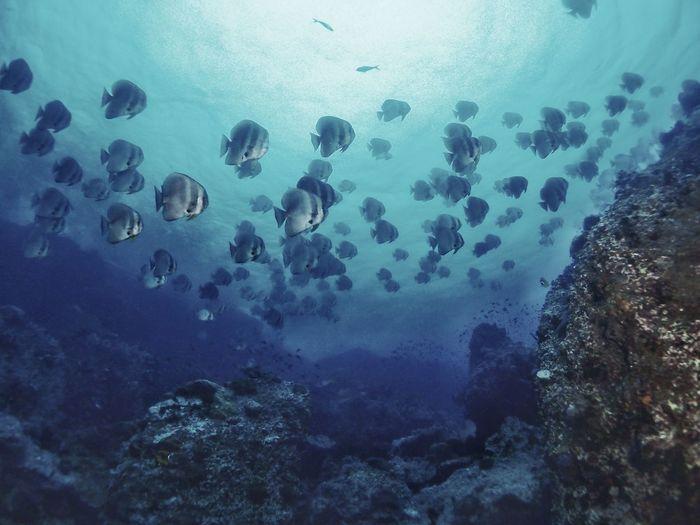 Underwater Scuba Diving First Eyeem Photo