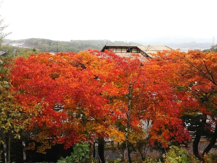 Japan Autumn colors 紅葉2017 紅葉 Japan Momiji Autumn Leaves 日本 紅葉狩り 狩り EyeEm Selects