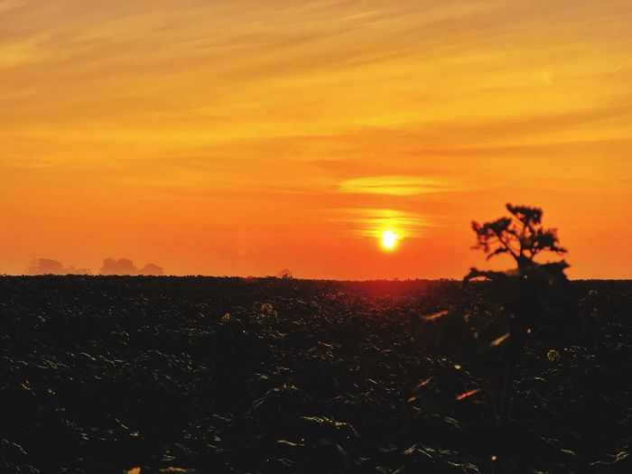 Sunrise Sunrise Sunset Sky Orange Color Beauty In Nature Plant Scenics - Nature Tree Sun