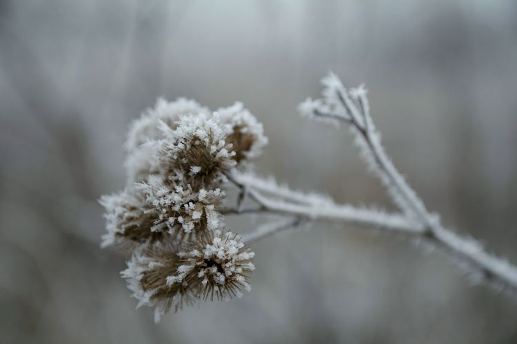 Winter Snow Cold Temperature Nature Plant Frozen Beauty In Nature Weather Close-up Outdoors Growth Fragility Day No People Branch