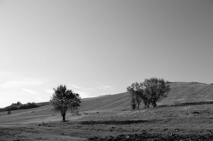 Landscapes in Marche Autumn Panorama The Week On EyeEm Tree Agriculture Backgrounds Beauty In Nature Blackandwhite Clear Sky Day Field Landscape Nature No People Outdoors Plough Plowed Field Rural Scene Scenics Sky Sun Tranquil Scene Tranquility Tree