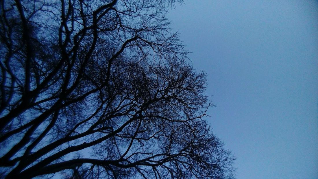 Sky Through The Trees  Sky Night Sky Poetic Night Threes Poetic Photography Night View