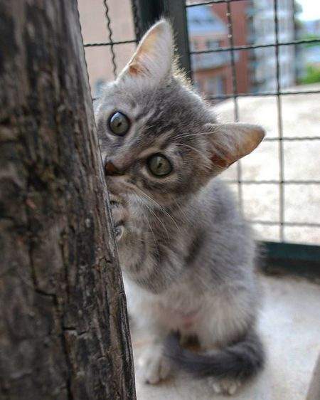 Merlina Babycat Beautiful Cute Lovely Photo Crazy Instacute Instaphoto Afternoon