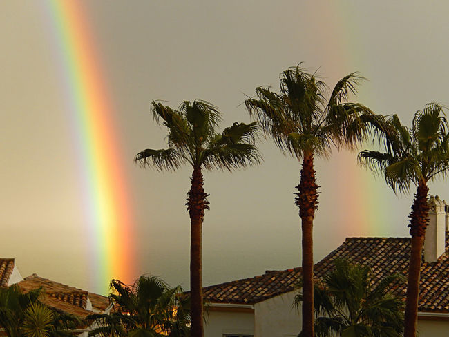 Double rainbow on a rainy day Bright Rainbow Colourful Double Rainbow Colourful Rainbow Double Rainbow Double Rainbow ❤ Double Rainbows Palm Tree Rain Day Rainbow Rainbow Rainbow Double Rainbow View Rainbow Views Rainbows Rainbow🌈 Rainy Day Tropical Climate