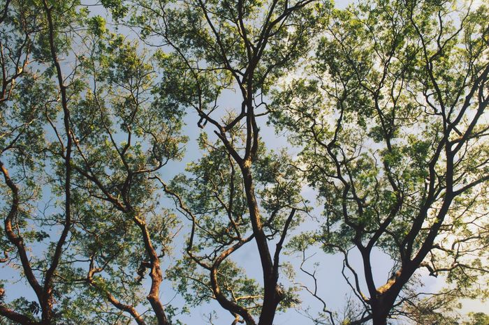 Beauty In Nature Branch Day Growth Low Angle View Nature No People Outdoors Sky Tranquility Tree