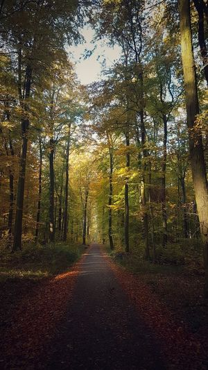 ambiance Treetrunk Path Path In Nature Forest Forest Photography Light And Shadow colour of life Colours Colourpop Autumn colors View Scenics EyeEm EyeEmNewHere EyeEm Best Shots Beautiful Sunshine Calmness Of Nature Calmness Ambient Light Ambiance Beauty In Nature Silence Is Golden Growth EyeEm Selects Moment Of Silence Amazing View Tree Forest Sky Fall Leaves Tree Trunk Growing Woods Fallen Autumn Change Leaf