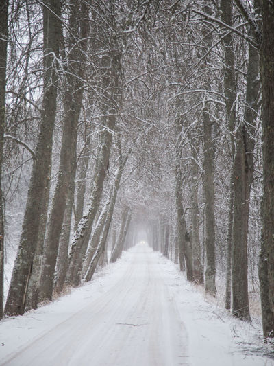 A beautiful winter landscape with snow in Latvia Latvia Nature Winter Landscape Nature No People Scenery Snow