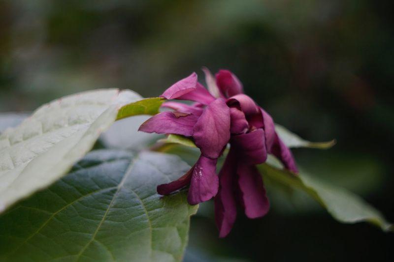Flowerporn