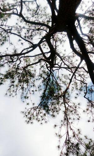 Tree Branch Low