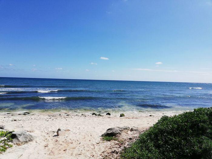 Water Sea Beach Clear Sky Blue Sand Summer Tree Sunlight Wave