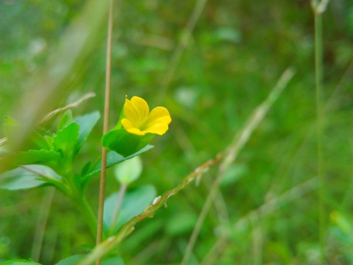 Yellow Nature Plant Leaf Flower Green Color Beauty In Nature Growth No People Close-up Outdoors Fragility Freshness Day