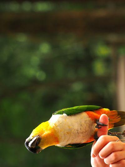 Parrot Turn Left Pet Portrait WoodLand Friend
