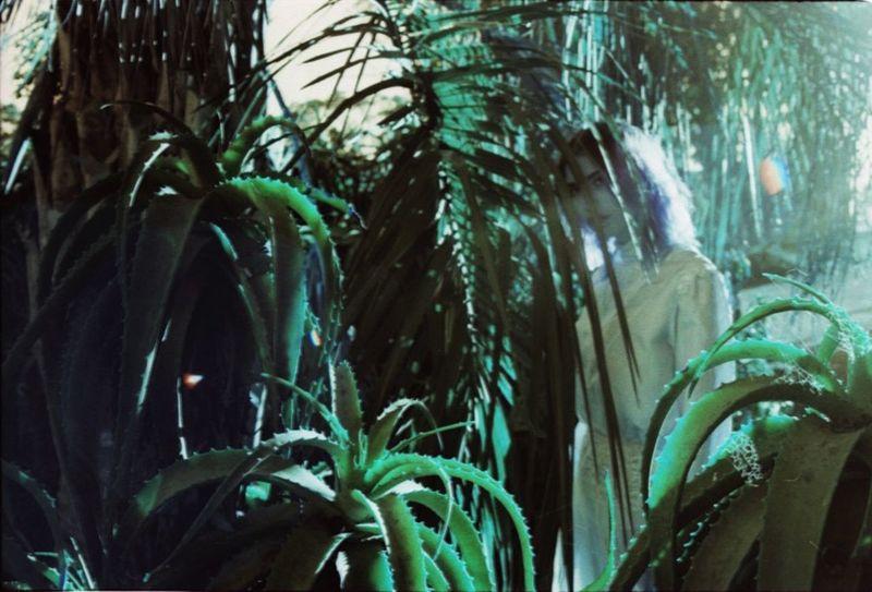 Laurenluck Organsinsleep Colors Woman Goddess Mothernature Supernatural 35mm Film Succulents Veraskyy Botanical Lomography Sunlight Experimental
