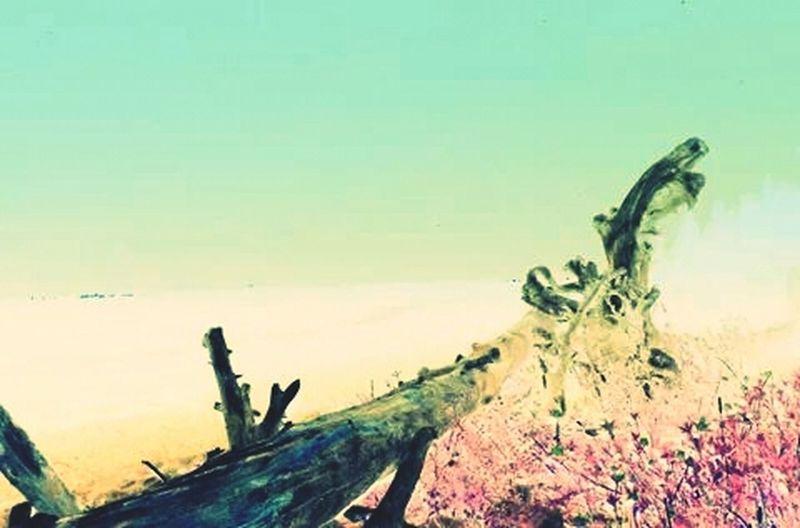 Inverted Scenery Landscape Edit