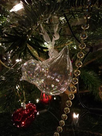 glass. bird